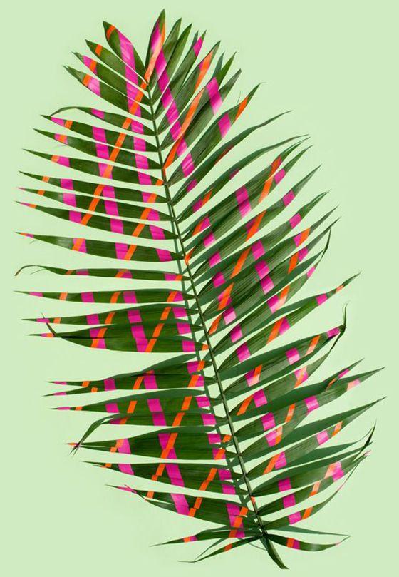 art direction   painted plant - sarah illenberger