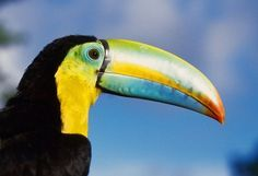 HIGHLIGHTS OF SOBERANIA NATIONAL PARK - Ancon Expeditions