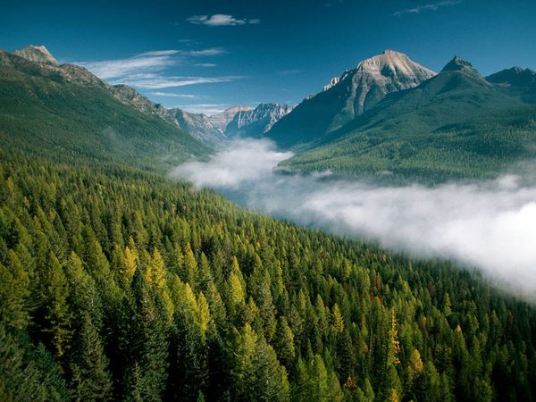 The tremendous range of topography in Glacier National Park supports more than a million acres (400,000 hectares) of forests, alpine meadows, lakes, rugged peaks and glacial-carved valleys in the Northern Rocky Mountains.
