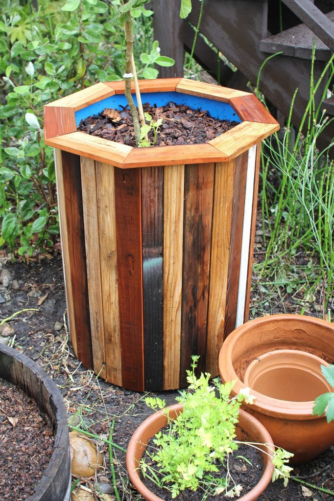 Turn a 55 gallon drum into a super cheap planter with an attractive pallet wood (read: free!) exterior