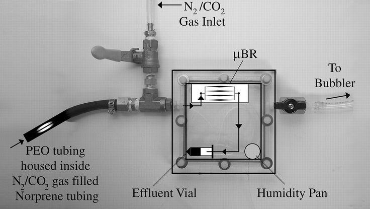 Cool!! Microbioreactor para cultivo y análisis de bactérias, algas y levaduras - PubMed - NCBI