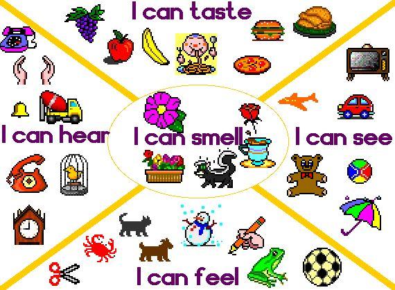 73 best images about 5 senses on Pinterest   5 senses craft ...