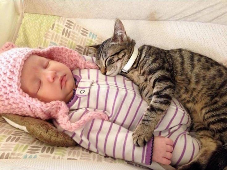 baby and cat sleeping together Kittens cutest, Cute cats