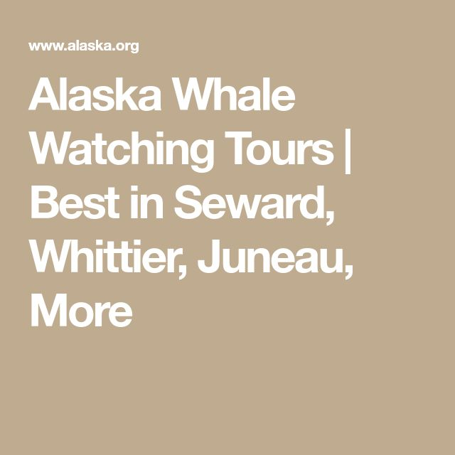 Alaska Whale Watching Tours | Best in Seward, Whittier, Juneau, More