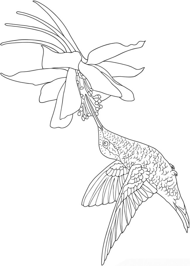 creative coloring birds art activity pages to relax and enjoy | hummingbird coloring page; Welcome to Dover Publications ...
