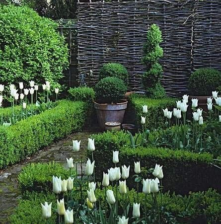 Boxwood, tulips, willow screen  beautiful combination of shapes and textures