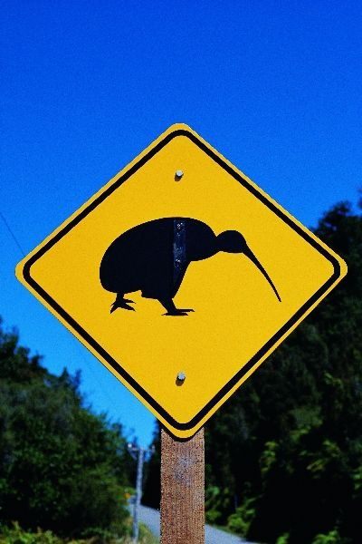 New Zealand - Kiwi Crossing. Just how slow ARE these birds?