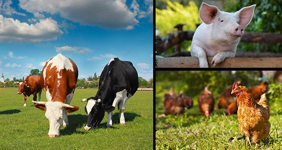 Expo Veneto: Meat - Feeding - Events