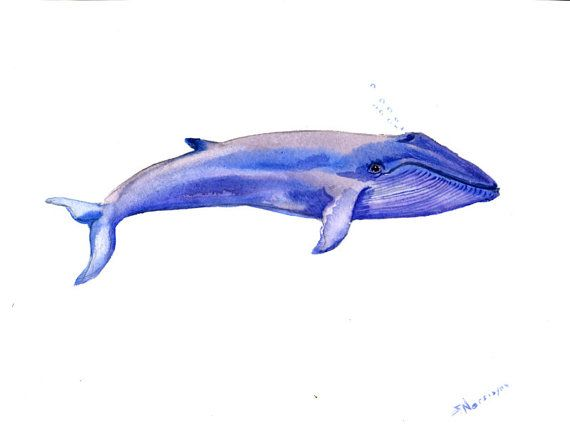 Blue Whale, Original watercolor painting, 9 X 12 in, sea ...