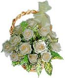 Shopping online white / creamy roses in basket for Hyderabad delivery. Fast and same day gifts delivery to all location in Hyderabad. Visit our site : www.flowersgiftshyderabad.com/Condolence-to-Hyderabad.php