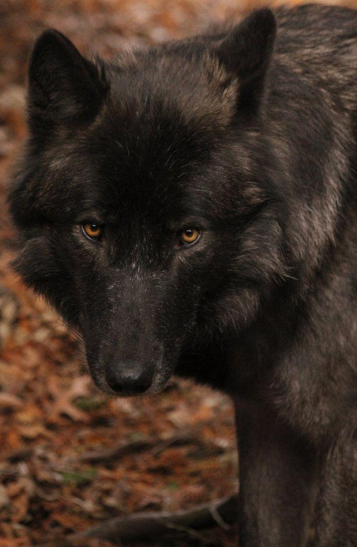 thatwanderinglonewolf:  I Have A Soul by Treekami on Deviantart