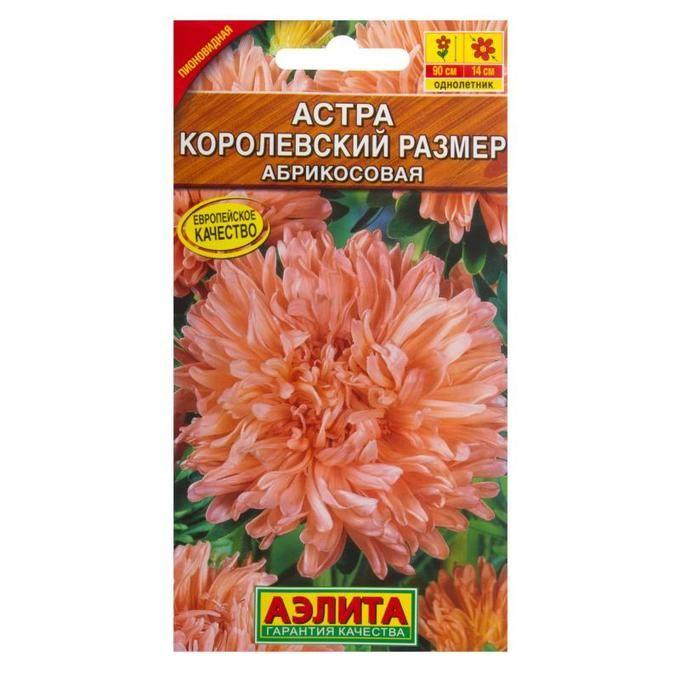 Астра Королевский размер, цвет абрикосовый | Семена цветов. Семена