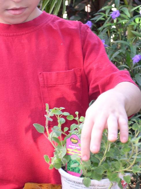 Sensory Garden Guide (Occupational Therapy Program, Barry University)