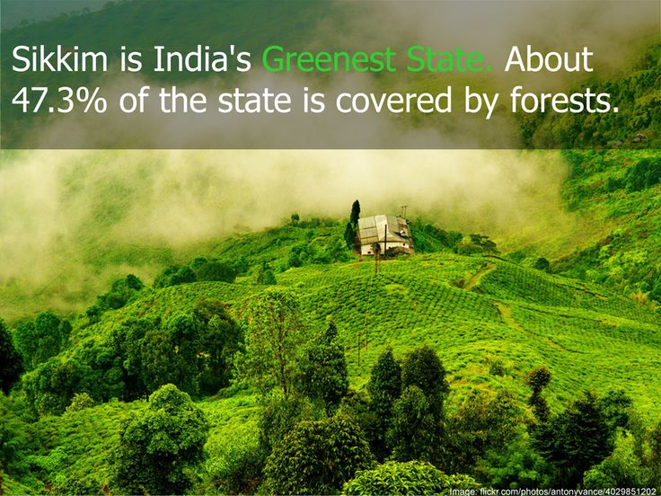 About 47.3 percent of Sikkim state in India is covered by forests. Sikkim has more than 400 species of orchid, 600 species of butterflies and 550 species of birds found at various altitudes.