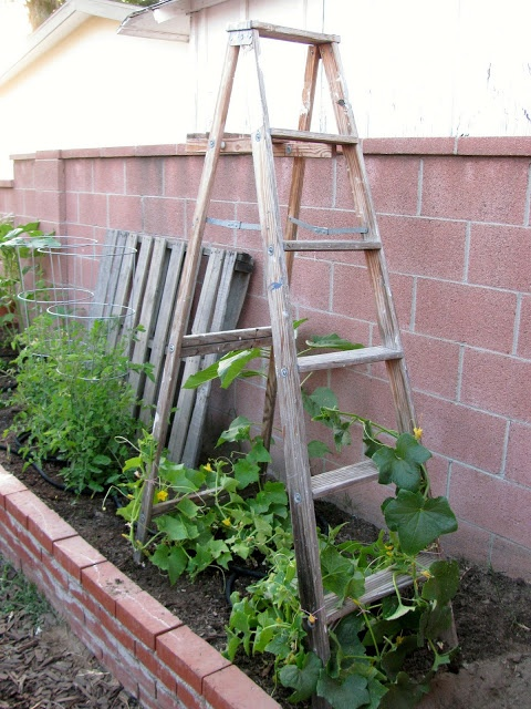 Full Sun Cottage Garden Plans