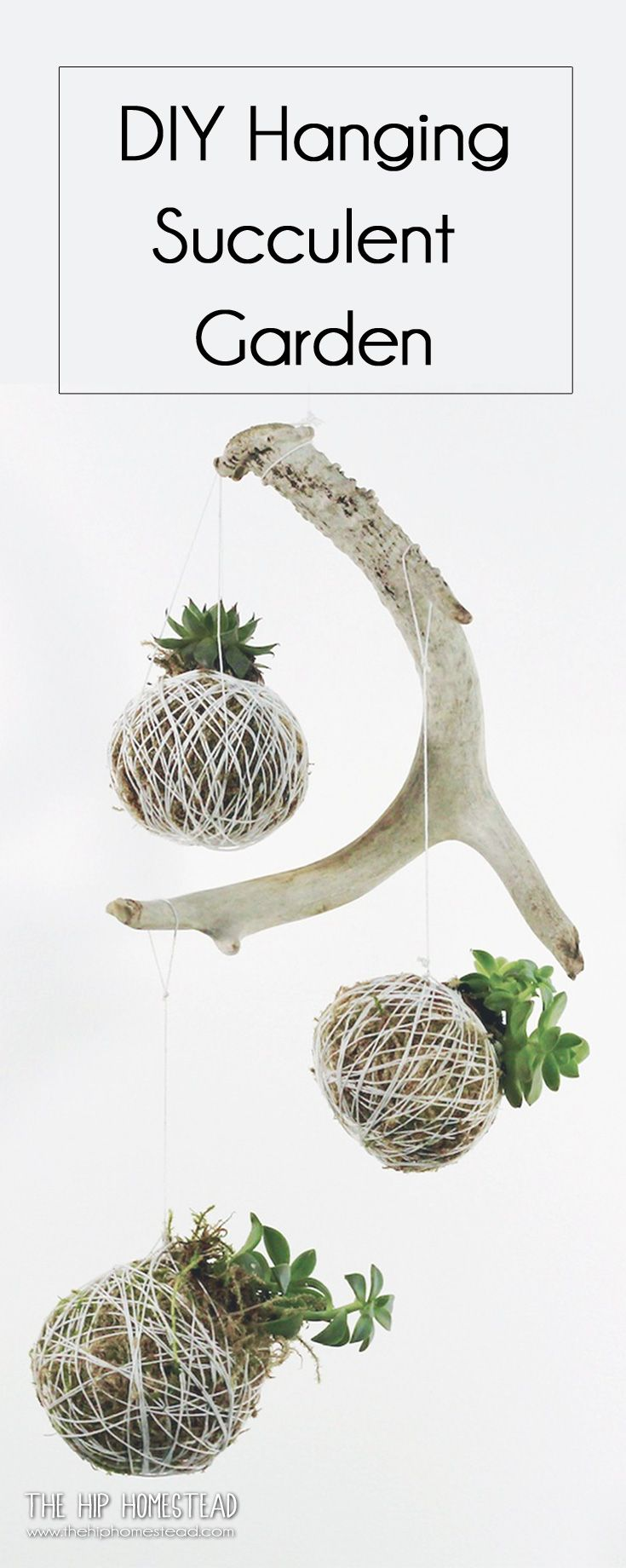 How to make a hanging succulent garden - The Hip Homestead #diy #succulent #hanginggarden