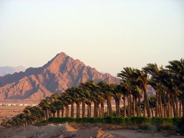 Mountain and palms in Sharm El Sheikh, Egypt