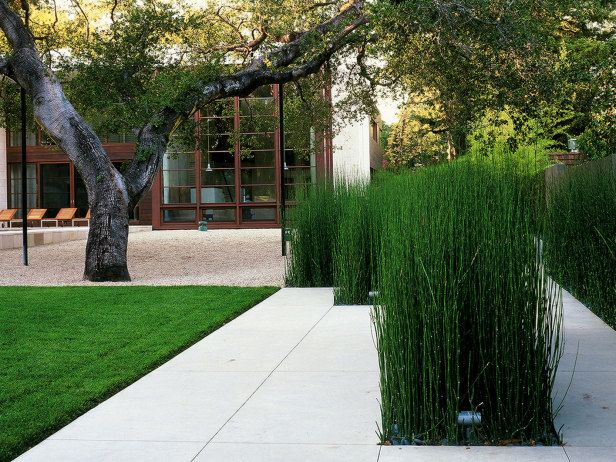 Straight-edged geometric forms combine with minimal plantings, including giant horsetails, papyrus, and a Japanese maple, create this clean looking garden. This concept reflect the Asian antecedents of the owners.