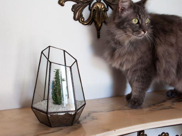 Terariu din sticla / suport pentru plante / obiect decorativ handmade