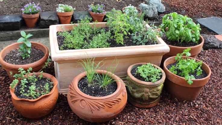 How to Plant a Culinary Herb Garden! DIY Kitchen Garden This guy is hilarious! XD