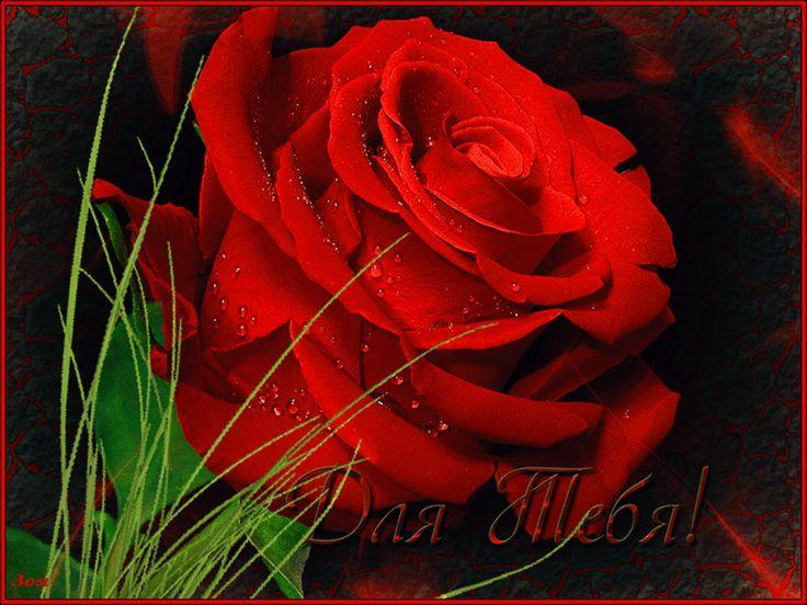 Гифка цветы для тебя