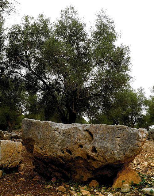Momentsbook.com: Ο βράχος κι η ελιά