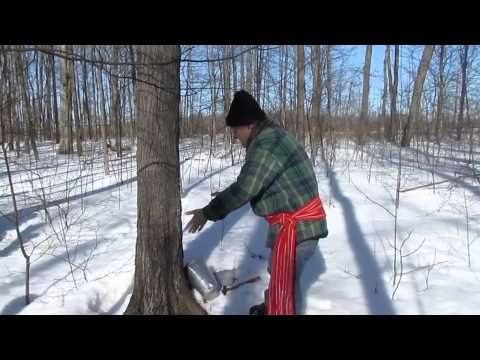 Cabane à sucre - Histoire du sirop d'érable - Sugar shack - The discovery of maple syrup - http://www.nopasc.org/cabane-a-sucre-histoire-du-sirop-derable-sugar-shack-the-discovery-of-maple-syrup/