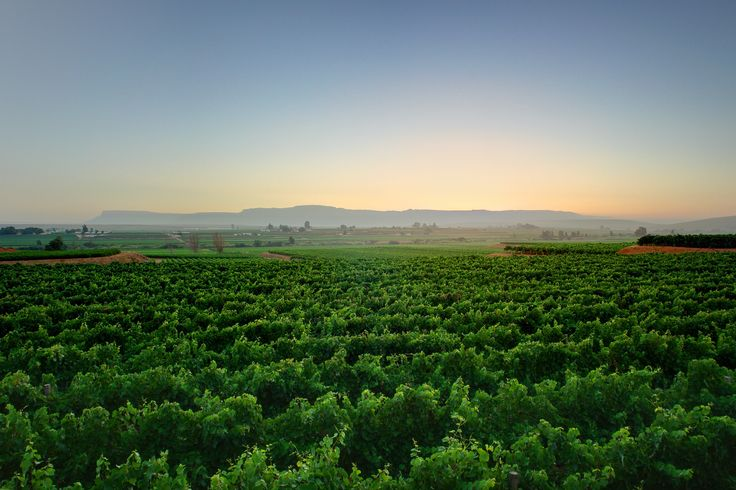 The Namaqua West Coast has much to offer as a wine producing area