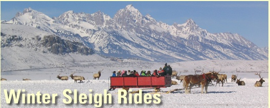National Elk Refuge Sleigh Rides in Jackson Hole - A Horse-drawn Sleigh Ride Among an Elk Herd Numbering in the Thousands www.fws.gov/nwrs/threecolumn.aspx?id=2147509854 Local 307.733.0277