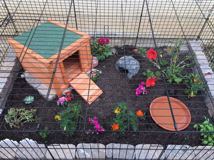 Tortoise enclosure out of a dog crate