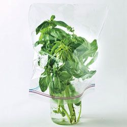 Our Best Trick for Storing Basil: BA Daily