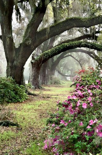 woodland alley #Trees #Gardens