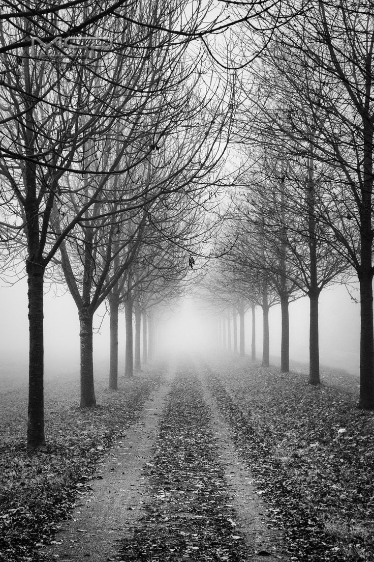 The Fog by Michael Schubert on 500px