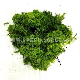 Мох Финский Ягель упаковка 500 гр/Moss Finland 500 Gr