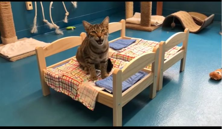 Shelter kitties at the Etobicoke Humane Society inEtobicoke, Canada, will be napping in style thanks to a donation of 10 doll beds and $300 from Ikea!