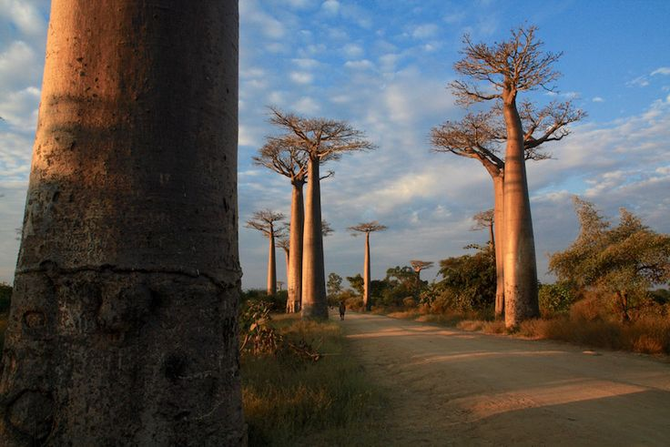The Ultimate Madagascar Backpacking Guide Travelling to Madagascar alone? On a budget? Want to backpack this amazing country but unsure where to start? Our blog post is the ultimate Madagascar backpacking guide covering everything from costs accommodation transportation trip itineraries top places to see and an essential packing list!