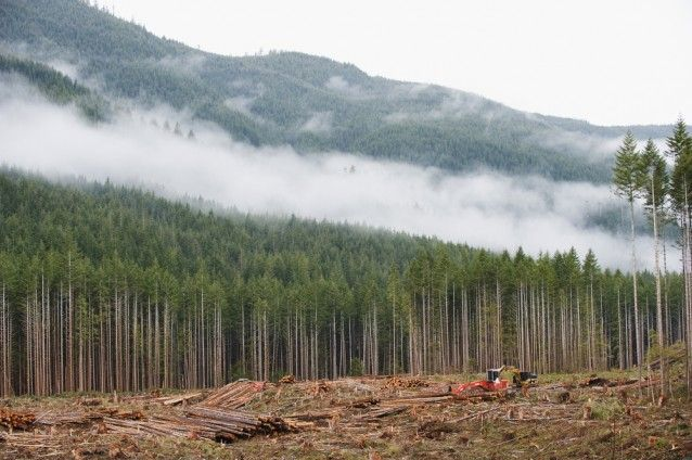Canada Tops the world in forest degradation. Thanks to climate change, logging and energy development