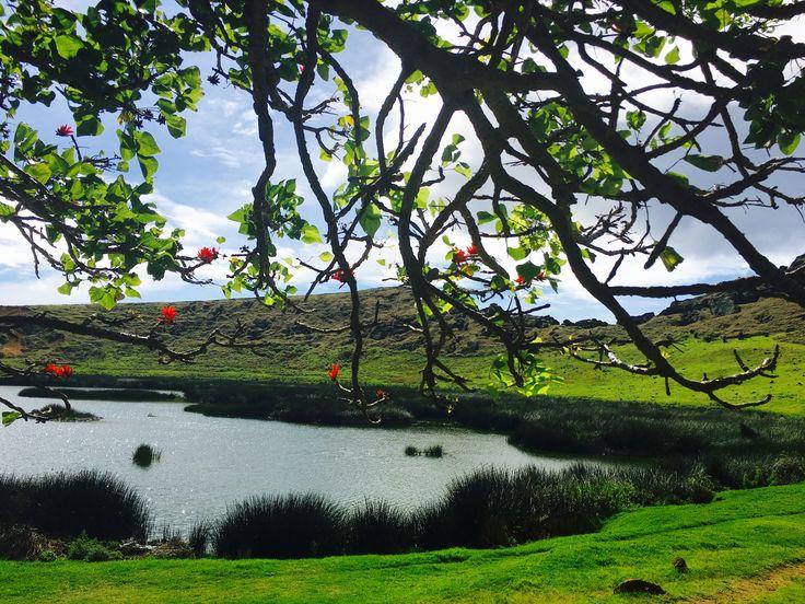 Ceibo- árbol de coral /isla de pascua