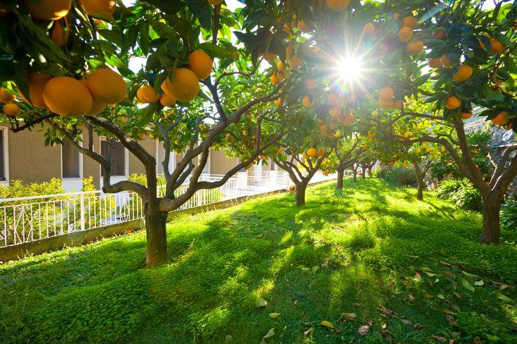 winter #garden #residencesantanna #pietraligure