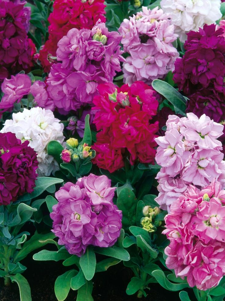 Discover outstanding annuals for strong seasonal color and get tips on when to plant from the experts on HGTV Gardens.