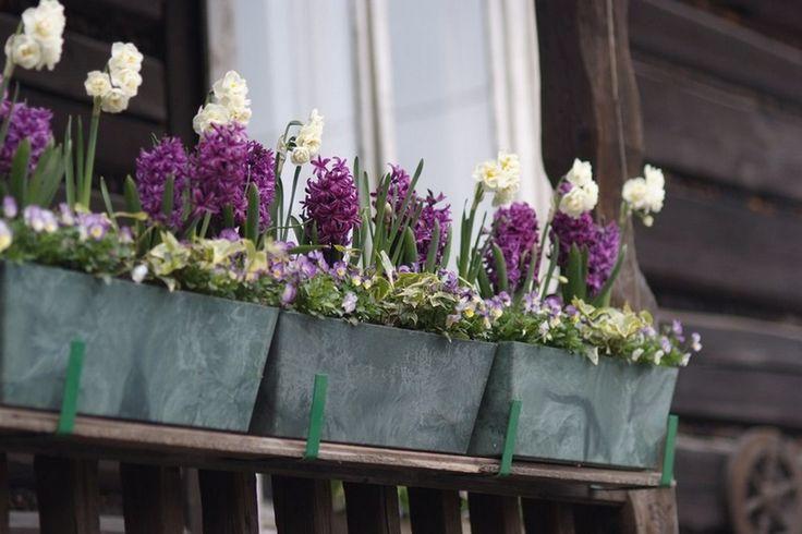ogrod.krakow.pl kwitnąca wiosna