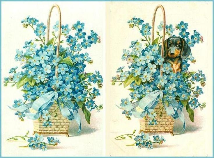 Днем, открытка с цветами незабудки