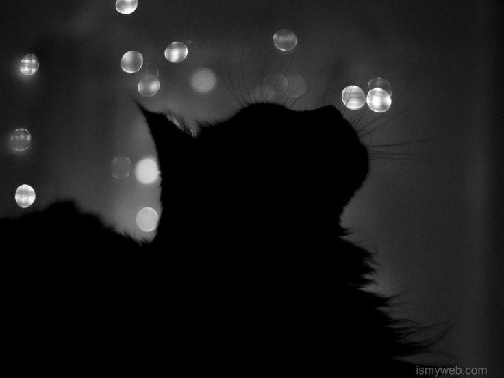 d61180de993cd81d3181a25ed61df29a  black silhouette cat quotes