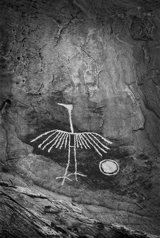 Wings of Stone--This heron petroglyph is located in an isolated and rarely visited area in the Colorado Plateau, so it has not suffered any vandalism. It has  about an 8 ft. length and a 6ft. wingspan
