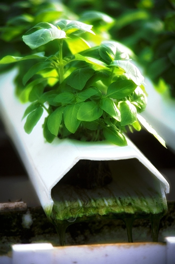 46 Best Images About Growing Herbs With Hydroponics On