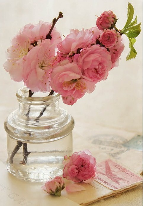 love these pink cherry blossoms...: Cherries Blossoms, Pink Flower, Pink Roses, Rosie Note, Spring Flower, Clear Glasses, Pretty Color, Pink Blossoms, Glasses Vases