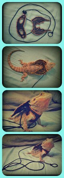 lizard harness   Tumblr