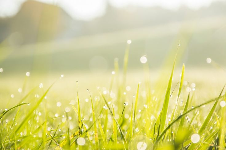 Download this free photo here www.picmelon.com #freestockphoto #freephoto #freebie /// Morning Dew | picmelon