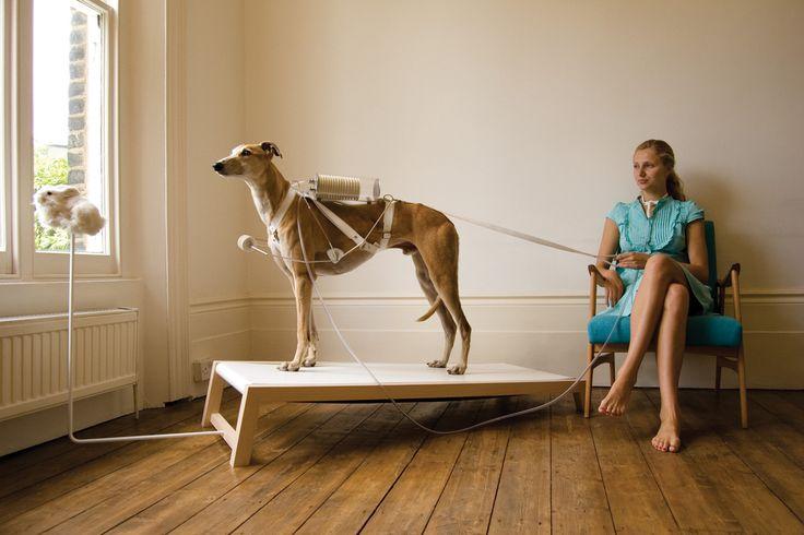 Life-Support---ventilation-dog_print-a4