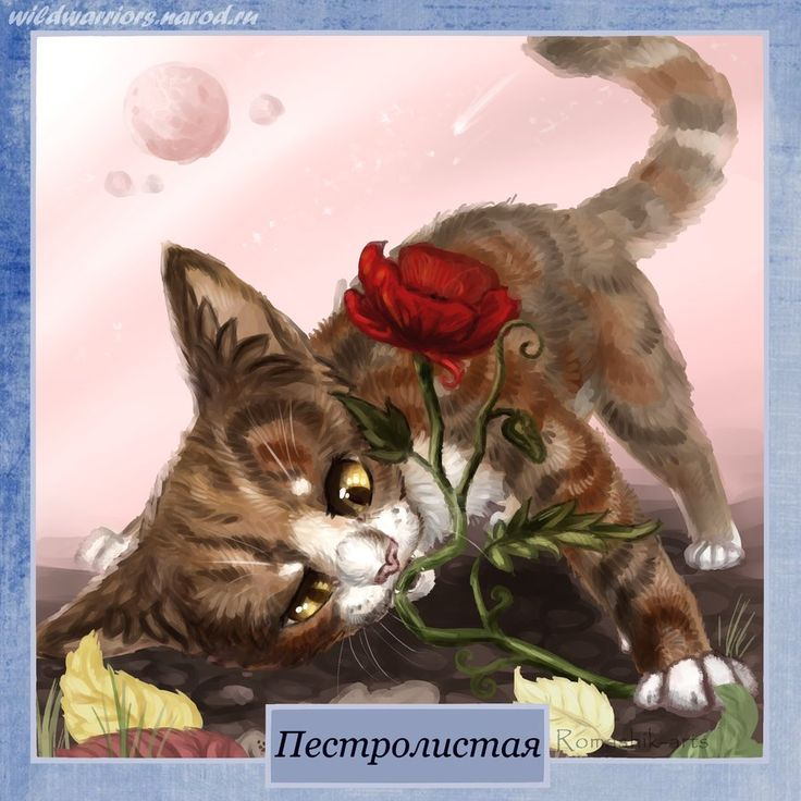 Warriors Erin Hunter Wallpaper: 147 Best Images About Warrior Cats On Pinterest